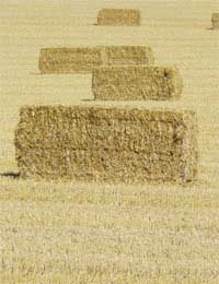 Build Using Straw Bale