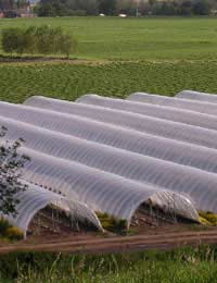 Erecting a Polytunnel: Practical Information