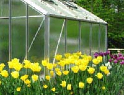 Glass or Plastic Panes for Your Greenhouse?