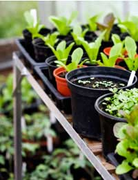 Storage in Your Greenhouse